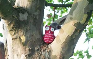 Die kleine Nachteule Liela lebt auf einem Baum auf dem Tempelhofer Feld. Foto + Eule: Kena Maier